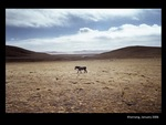Horse in Kharnang